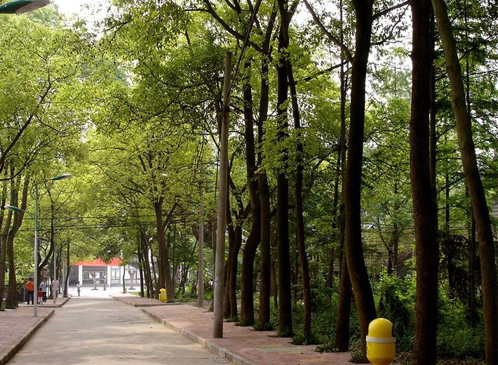 重庆青年太阳城学院校园街道