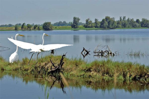 白鹭湾湿地公园